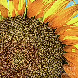 Happy Sunflower by Norman Gabitzsch