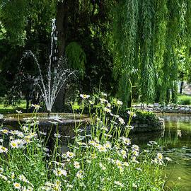 Happy Sunny Daisies - Summertime Biophilic Fountain by Georgia Mizuleva