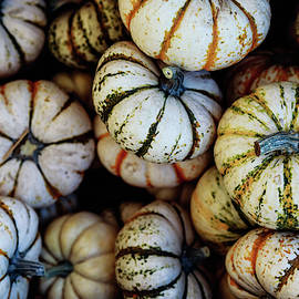 Harvest by Jason Roberts