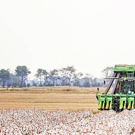 Harvesting the Last Rows by Scott Pellegrin