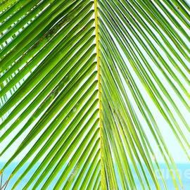 Hawaiian At Heart by Alejandro Pickart