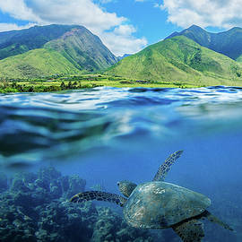 Hawaiian Honu by Tyler Rooke