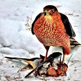Hawk With Prey by Debbie Stahre