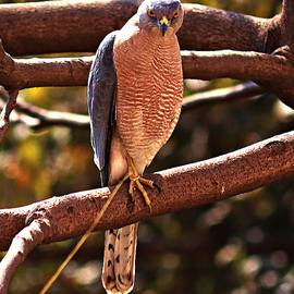 Hawk2 by Nilu Mishra