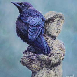 He ain't heavy, he's my jackdaw by Elaine Jones