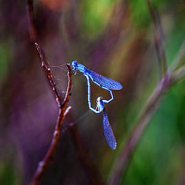 Heart Of Dragonfly by Anthony Jones