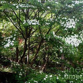Heaven's Forest by Nancy Kane Chapman