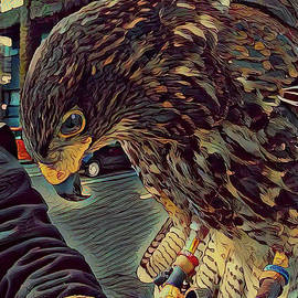 Hector The Harris Hawk by Jack Torcello