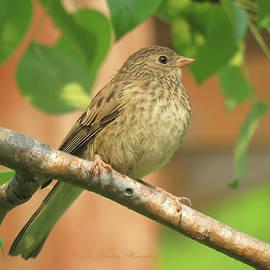 Hello World - Wildlife Photography - Birds - Avian Art by Brooks Garten Hauschild