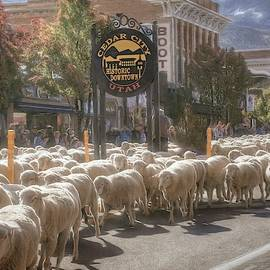 Here Come the Sheep by Donna Kennedy