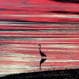 Jack Milton - Heron at Sunset