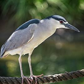Heron On A Rope by T A Davies