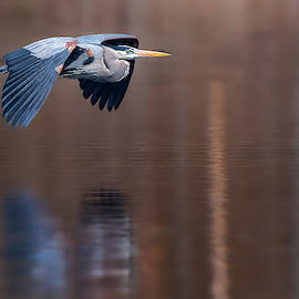 Heron Reflections by Bill Wakeley