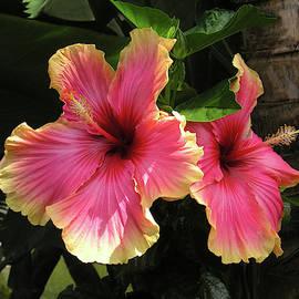 Hibiscus Duet by Jane Loomis