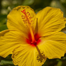 Hibiscus Macro by Keith Smith