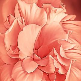Hibiscus Rosa Double Petaled Peach by Mira Minerva