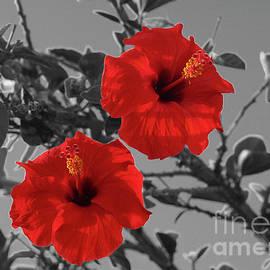 Hibiscus Selective Color by Eddie Barron