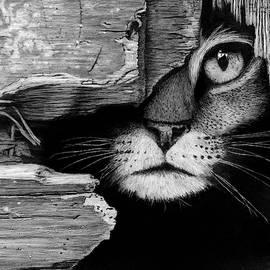 Hiding Cat by James Schultz