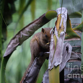 Hiding Squirrel by Michelle Meenawong