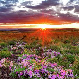 High Desert Spring by Leland D Howard