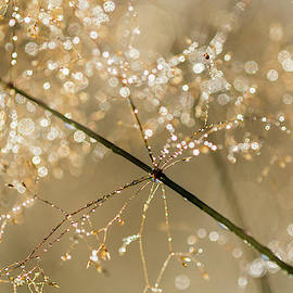 Highlights In The Grass by Robert Potts