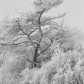 Hoar Frost At Bvg 2018-12 Bw by Thomas Young