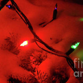 Holiday Lights-8118 by Gary Gingrich Galleries