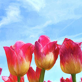 Holland Ridge Tulip Farm # 24 by Allen Beatty
