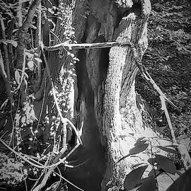 Holy Tree by Rob Hans
