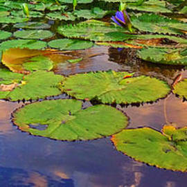 Homage to Monet - Water Lilies 1 by Miriam Danar