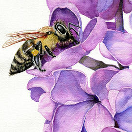 Honey Bee and Lilacs by Linda Apple