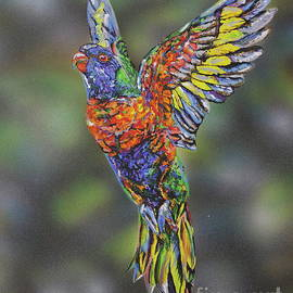 Hope Rainbow Lorikeet by Susan Willemse