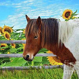 Regina Geoghan - Horse and Sunflower Field