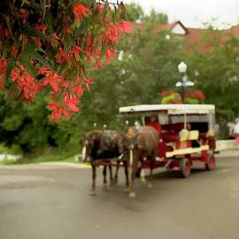 Horse Drawn Carriage by LuAnn Griffin