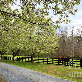 Horse Farm In The Country by Jill Lang