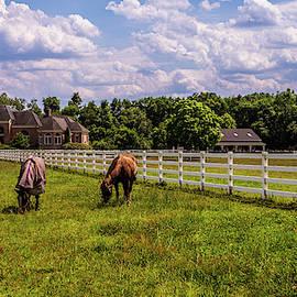 Horse Farm by Louis Dallara