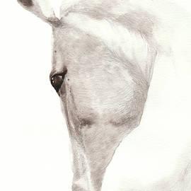 Horse head by Elena Gabbasova