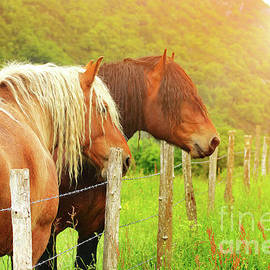 Horses in sunset by Gregory DUBUS