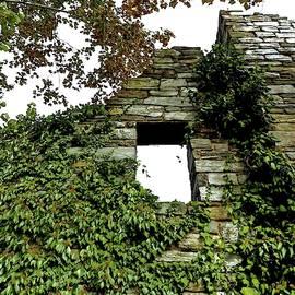 Alida M Haslett - House Of Vine