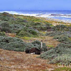 How Many Ostriches Do You See Here at the Cape of Good Hope by Catherine Sherman