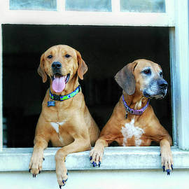 How Much Are Those Doggies in the Window by Marilyn DeBlock