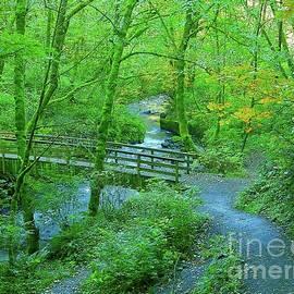 Hugging The Forest Bridal Veil Creek by Art Sandi