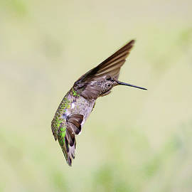 Hummingbird Dance by Wes and Dotty Weber