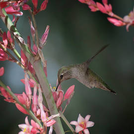 Hummingbird hovers  by Ruth Jolly