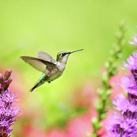 Hummingbird In Paradise by Christina Rollo