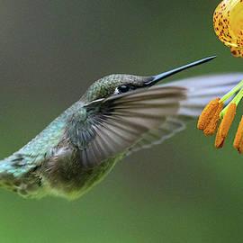 Wings Aflutter by Joy McAdams