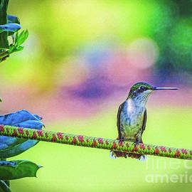 Hummingbird on Watch by Sue Melvin