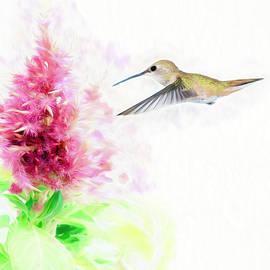 Hummingbird Pastels by Scott Bourne