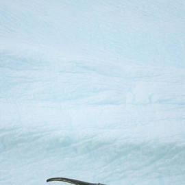 Humpback Whale, Grandidier Passage by Eastcott Momatiuk