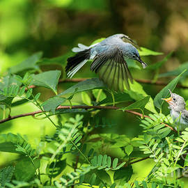 Hungry Baby Bird by Anthony Morrison